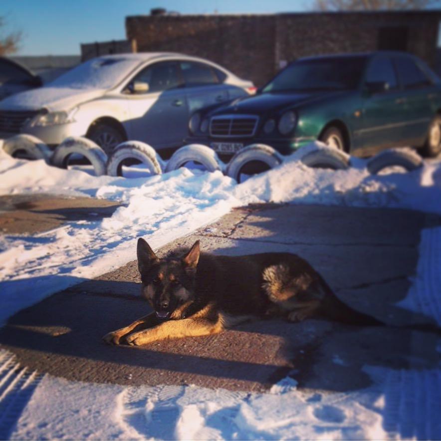 Лада - она лучше всех знает парковку и в любой момент найдёт для Вашего авто свободное место.